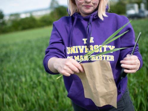 Lauryn McLoughlin von der University of Manchester nimmt Bodenproben eines Detektors zur Messung der Lachgasmenge. (Bild: KEYSTONE/ENNIO LEANZA)