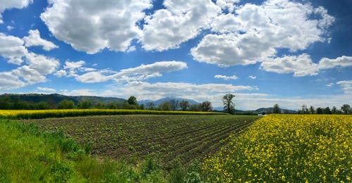 Wird es doch noch Frühling? (Bild: Peter Bumbacher, Zug, 14. Mai 2019)