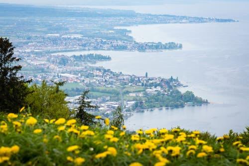Vom höchsten Punkt hat man eine schöne Aussicht auf den Bodensee. (Bild: Claudio Weder)