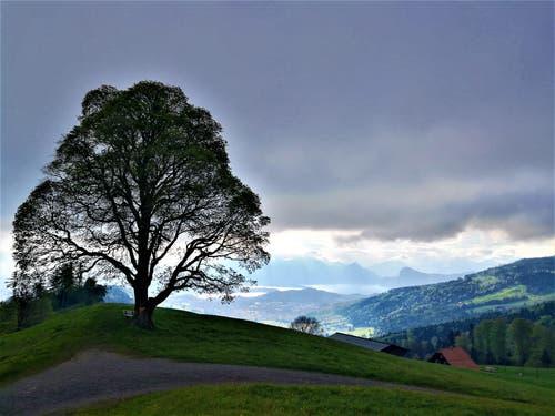Mystische Morgenstimmung mit dem hochnebelartigen Wolkenband und den Sonnenstrahlen auf die Berge und den Vierwaldstättersee. (Bild: Urs Gutfleisch, Holderchäppeli, 15. Mai 2019)