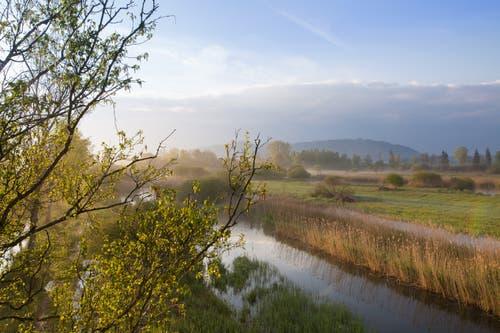 Morgenstimmung im Naturschutzgebiet Wauwilermoos. (Bild: Priska Ziswiler-Heller, 16. Mai 2019)