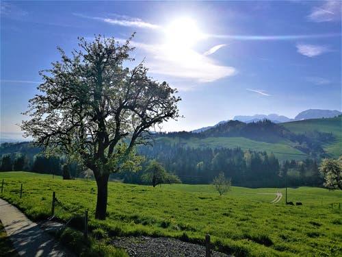 Strahlender Sonnenschein heute Morgen auf der Rengg/LU im Entlebuch bevor die Kaltfront kommt. (Bild: Urs Gutfleisch, Rengg, 2. Mai 2019)