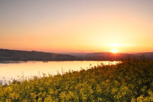 Romantischer Sonnenuntergang über dem Rapsfeld von Eich. (Bild: Xaver Husmann, Eich, 1. Mai 2019)