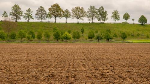 Auch bei trübem Wetter ein Bild wert - Spaziergang bei Schötz. (Bild: Erich Heiniger, Schötz, 18. Mai 2019)