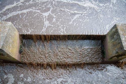 ...Reststoffe aus dem Wasser gelöst. Das Wasser ist in ständiger... (Bilder: Raphael Rohner)