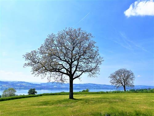 Wunderbares Frühlingswetter mit Aussicht auf den Sempachersee. (Bild: Urs Gutfleisch, Sempach, 23. Mai 2019)