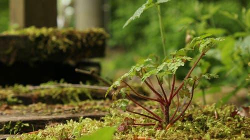 Eine Aufnahme von der Kraft der Natur. (Bild: Irene Wanner, Ettiswil, 25. Mai 2019)