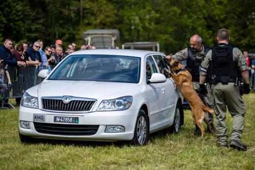 Demonstration mit einem Hund bei der Militärpolizei. (Bild: Philipp Schmidli, Emmen, 25. Mai 2019)
