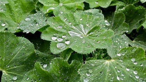 Hoffentlich sind das die letzten Regentropfen im Monat Mai. (Bild: Peter Bumbacher, Unterägeri, 26. Mai 2019)