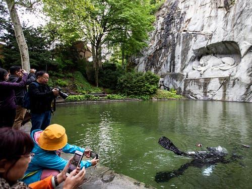 Für viele Touristen ein beliebtes Fotosujet: Die Unterwasserfotografin Heidi Hostettler testet ihren Tauchgang im Teich vor dem Luzerner Löwendenkmal. (Bild: KEYSTONE/ALEXANDRA WEY)