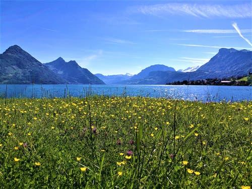 Traumhaftes Frühlingswetter am Vierwaldstättersee. (Bild: Urs Gutfleisch, Buochs, 31. Mai 2019)