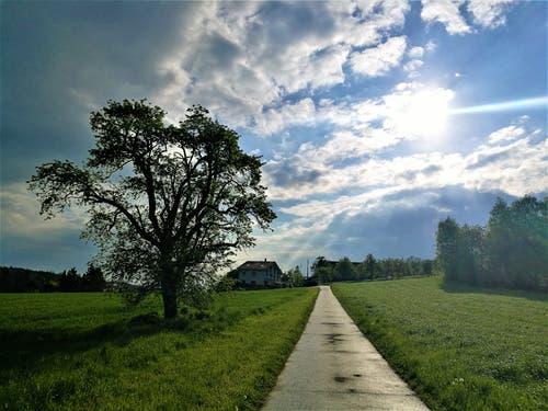 Morgenstimmung mit einigen Sonnenstrahlen - bevor der Regen kommt. (Bild: Urs Gutfleisch, 4. Mai 2019)
