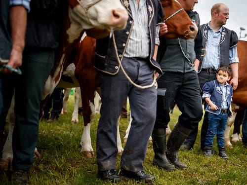 Für einen Viehzüchter ist es eine Ehre, wenn seine Kuh an der Fête des vignerons teilnehmen darf. (Bild: KEYSTONE/VALENTIN FLAURAUD)