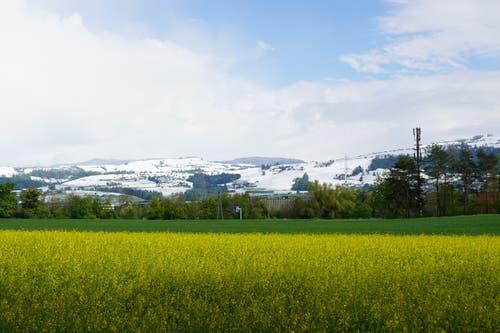 Winter grüsst Frühling. (Bild: Daniel Bergls, Steinhausen, 5. Mai 2019)
