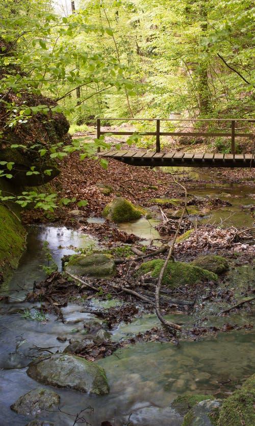 Kleiner Bach plätschert durch den Frühlingswald. (Bild: Priska Ziswiler-Heller, Sempachersee, 5. Mai 2019)