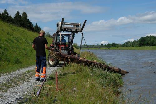 Mithilfe des Traktors wird das Holz aus dem Fluss gehievt.