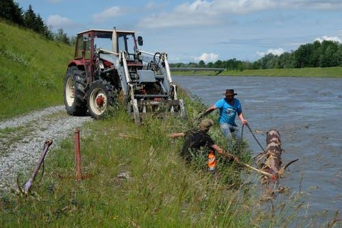 Der Stamm wird am Traktor angebunden. (Bilder: Hans Jakob Reich)