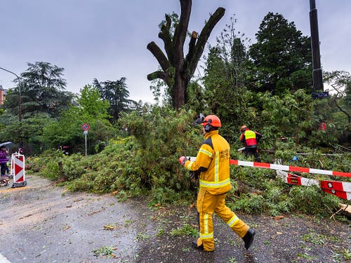 «Baumpflege» nach dem Gewittersturm vom Samstagnachmittag in Genf. (Bild: KEYSTONE/MARTIAL TREZZINI)