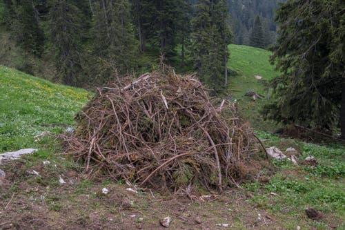 Ein Haufen Geäst auf der Alp Fräkmünt.
