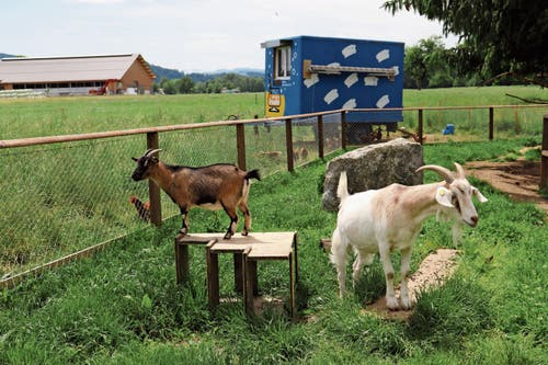 Auch Geissen und Hühner leben auf dem Hof. So sind im Hoflädeli auch Freilandeier erhältlich.
