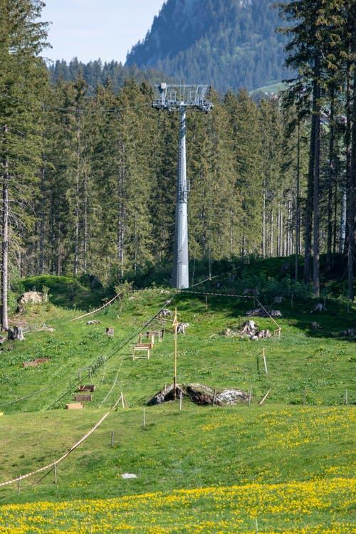 Der tragische Unfall wirft einen Schatten auf die Alpidylle auf der Gerschni. (Bild: Keystone/Urs Flüeler, 5. Juni 2019)