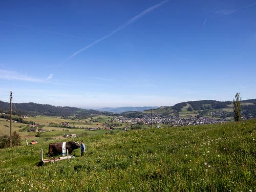 Zweisamkeit auf dem Spazierigang: Stier Kolin mit Mändel in Unterägeri. (Bild: Keystone/ALEXANDRA WEY)