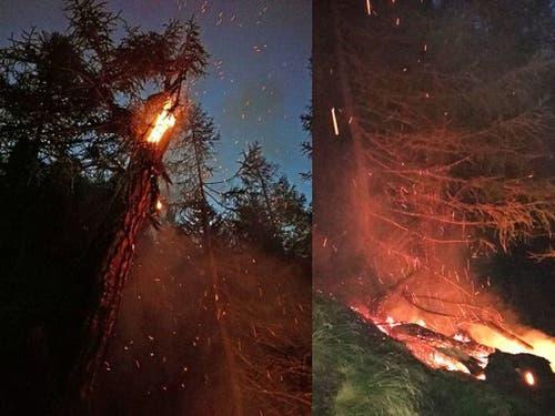 In einem Lärchenwald im Kanton Wallis wurde am 13. September 2018 um 00:38 Uhr ein Brand entdeckt. WSL-Forschende fanden heraus, dass der ihn auslösende Blitz wahrscheinlich am Tag davor um 23:44 Uhr eingeschlagen hatte, also fast eine Stunde davor. (Bild: Marco Gerold, Revierförster Forstrevier Simplon Süd VS)