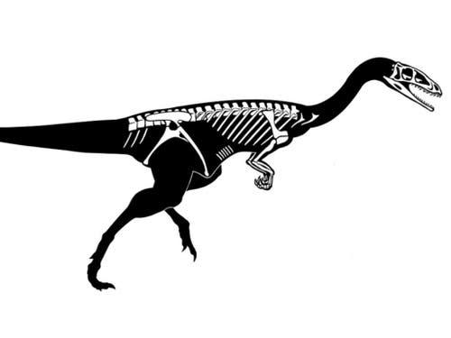 Die Abbildung zeigt die erhaltenen Skelettelemente des Raubdinosauriers, den Forschende in Frick AG gefunden haben. (Bild: Beat Scheffold)