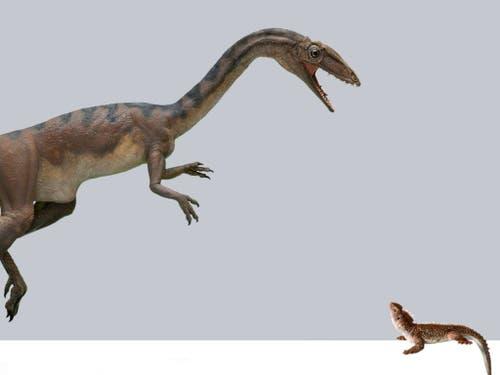 Der Raubdinosaurier Notatesseraeraptor mit seiner Beute, dem kleinen Pflanzenfresser Clevosaurus. (Illustration) (Bild: Beat Scheffold)