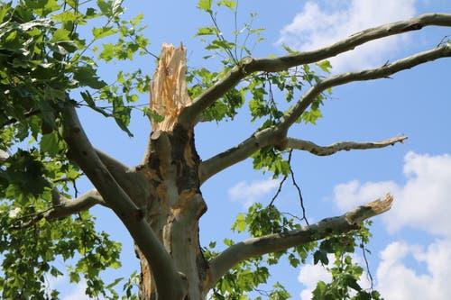 An der Glärnischstrasse in Wil wurden mehrere Bäume stark beschädigt. Zum Teil wurden grosse Teile der Krone weggerissen.