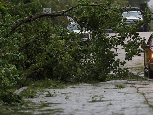 Von «Barry» gefällt: Ein Fahrer muss einem Baum auf der Fahrbahn ausweichen. (Bild: KEYSTONE/AP/ROGELIO V. SOLIS)