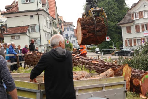 Manche Interessenten haben im Vorhinein grösser Teile der Mammutbäume reserviert. Bild: yal