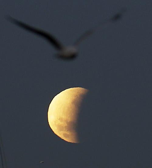 Die partielle Mondfinsternis aufgenommen in Sydney, Australien. (Bild: Rick Rycroft)
