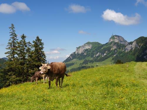 Pittoreskes Appenzeller Alpenpanorama