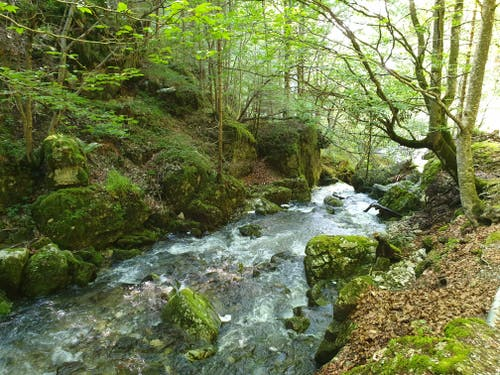 Dem Brüelbach entlang geht es durchs Brüeltobel zurück ins Tal.