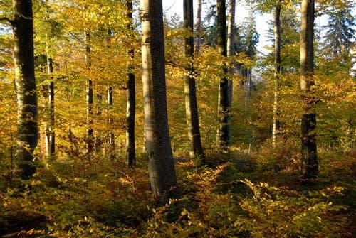 Ein Indian Summer, auch goldener Herbst genannt, im Zugerland. (Bild, Martin Heimann, Zug, 18. Oktober 2007)