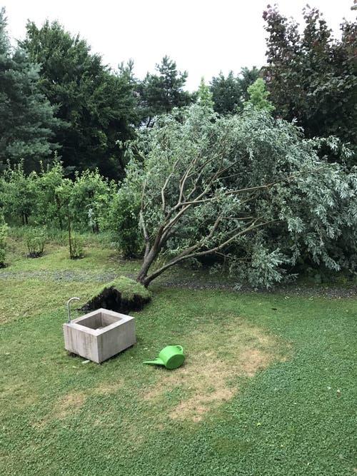 Dieser Weidenbaum hielt dem Sturm nicht Stand. (Leserbild: Brigit König, Luzern, 6. Juli 2019)