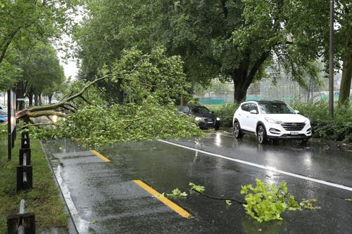 Die Autos müssen den eingesetürzten Bäumen ausweichen. (Leserbild, Luzern, 6. Juli 2019)