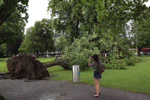 Definitiv ein Foto wert: der entwurzelte Baum beim Lido. (Bild: Philipp Schmidli, Luzern, 6. Juli 2019)