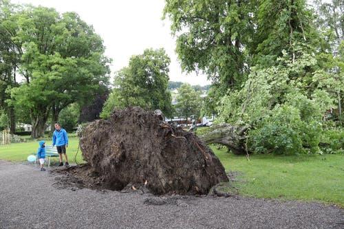 Ein entwurzelter Baum beim Lido in Luzern. (Bild: Philipp Schmidli, Luzern, 6. Juli 2019)