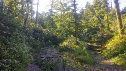 Der Bireggwald war bereits vom Sturm Burglind betroffen. (Bild: Stefan Dähler, 7. Juli 2019)