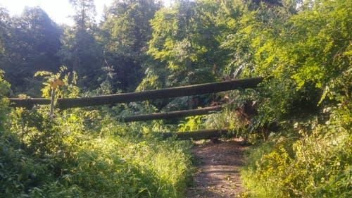 Auch der Bireggwald an der Grenze zwischen der Stadt Luzern und Horw wurde verwüstet. (Bild: Stefan Dähler, 7. Juli 2019)