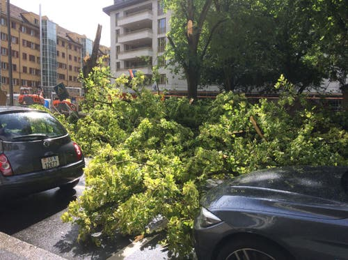 Umgestürzter Baum und Äste auf Bleicherstrasse beim Bleichergärtli. (Leserbild: Marianne Brunner, Luzern, 6. Juli 2019)