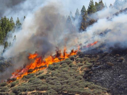 Ein Waldbrand wütet auf der spanischen Insel Gran Canaria, hier in der Nähe der Ortschaft Artenara. (Bild: KEYSTONE/EPA EFE/ELVIRA URQUIJO A.)