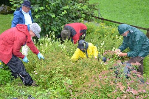 Die LoT-Truppe beim Kampf gegen das einjährige Berufskraut, eine invasive Pflanze.