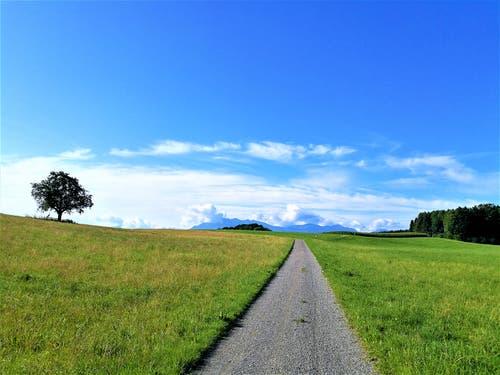 «Der Weg ist das Ziel» dieses Motto gilt heute für alle Spaziergänger und Wanderer bei diesem wunderbaren Sommerwetter. (Bild: Urs Gutfleisch, 14. August 2019, Römerswil)