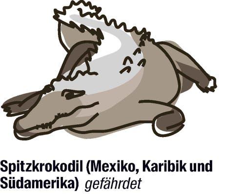 Vorschlag von Mexiko: der Artenschutz soll gelockert werden.Seitdem die Art von der Cites (Convention on International Trade in Endangered Species of Wild Fauna and Flora) streng geschützt wird, nehmen die Bestände wieder zu. Mexiko will nun den Schutz der Krokodile lockern, um einheimischen Bauern die Zucht und somit die Produktion von Krokodilhaut zu ermöglichen.