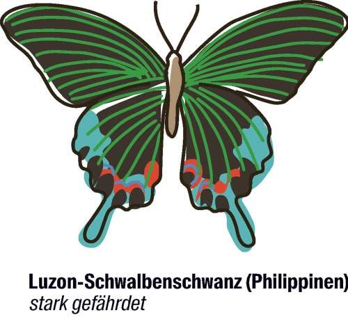 Vorschlag der Philippinen und der EU: der Artenschutz soll strenger werden.Der filigrane Schmetterling kommt nur auf der Insel Luzon vor. Die Unterart, die jetzt speziell geschützt werden soll, wurde erst vor kurzem entdeckt.