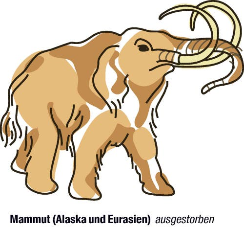 Vorschlag von Israel: der Artenschutz soll strenger werden.Das Auftauen des Permafrosts legt immer mehr Mammuts frei, sie werden für viel Geld gehandelt. Israel fordert darum, den Handel mit Mammutteilen strenger zu regulieren.