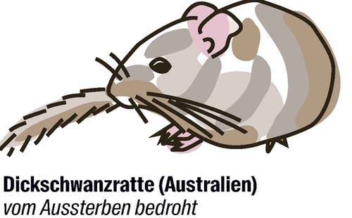 Vorschlag von Australien: der Artenschutz soll gelockert werden.Insgesamt gibt es nur noch etwa 800 Exemplare der Zentralen Dickschwanzratte. Trotzdem fordert Australien, die Art von der Liste der im Handel verbotenen Tiere zu streichen. Die Begründung: Die Tiere seien für den Handel uninteressant, er habe deshalb keinen Einfluss auf den Fortbestand der Art.